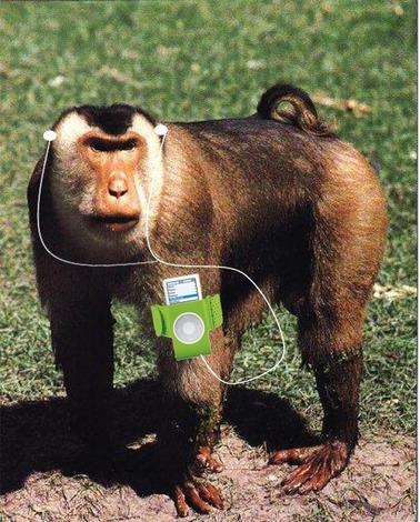 [img width=378 height=470]http://indianadj.files.wordpress.com/2008/01/monkey.jpg?w=460[/img]